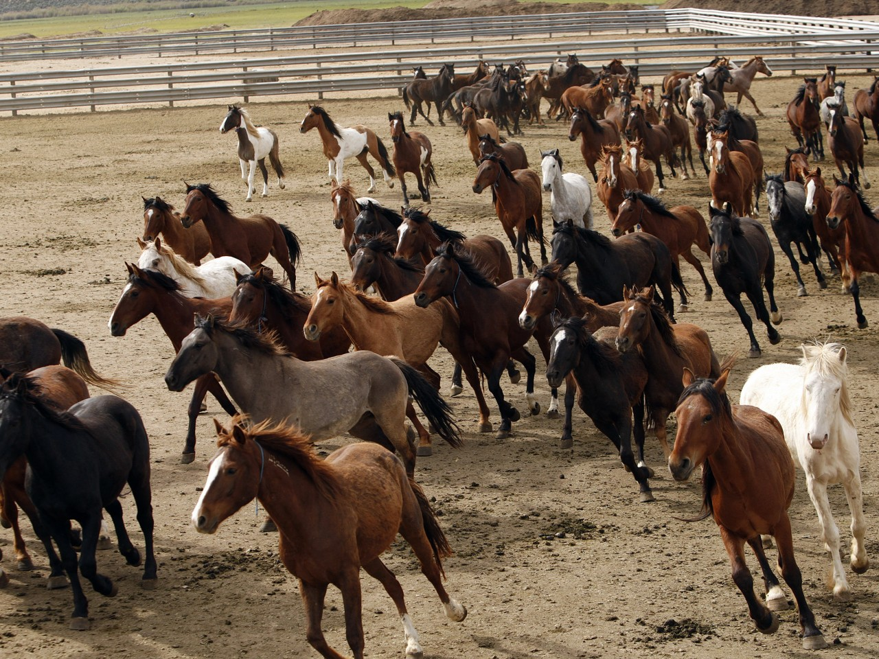 wild-horses-independent-review.jpeg-1280x960