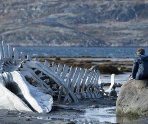 Leviathan (2014, Yön: Andrey Zvyagintsev)