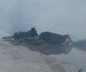 Kameraya Akü Bulamıyorlar, Geyik Mi Bulacaklar?: Neden Tarkovski Olamıyorum…