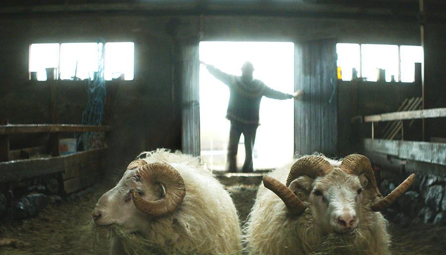 Hrutar-Rams