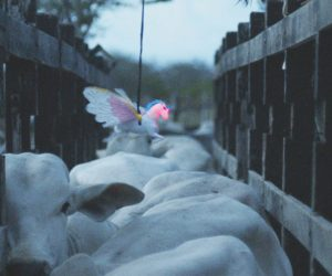 35. İstanbul Film Festivali İzlenimleri: Asil Atlar, Neon Boğalar