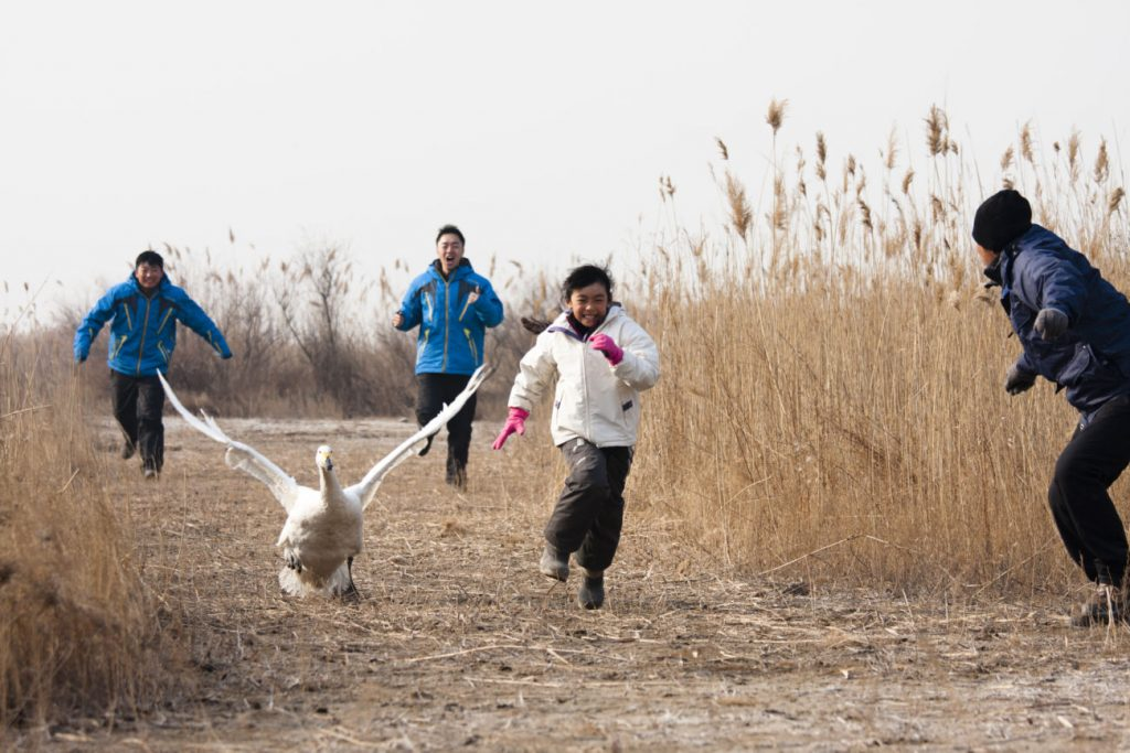 Kuğu / I Swan
