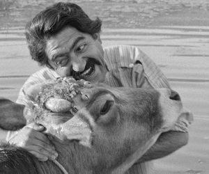 Ben Hassan Değilim, Onun İneğiyim: The Cow