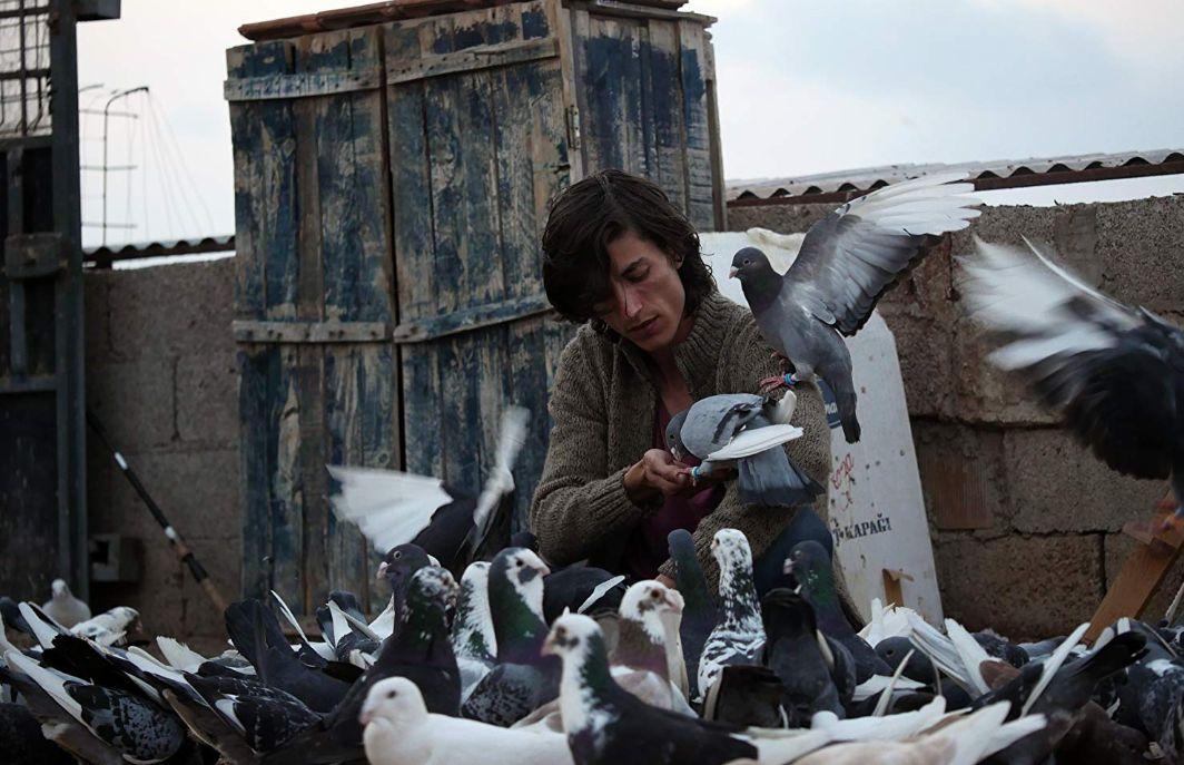 Güvercin (2018): Göğe Bakan Kutular
