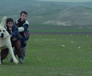 Köpeğin de Canı Yok mu?: Sivas (2014)